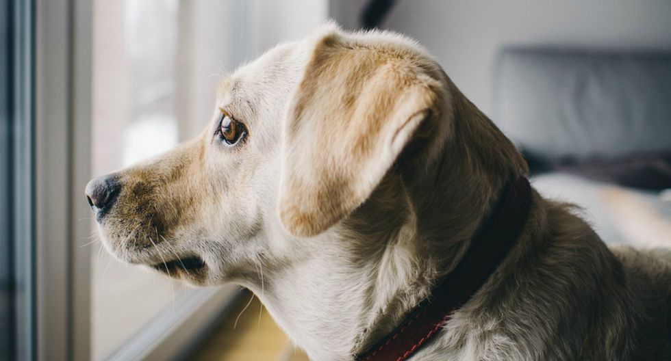 De momento el servicio permite crear listas de reproducción para cinco tipos de animales: perro, gato, hámster, pájaro e iguana. (Foto: Referencial/Pixabay)