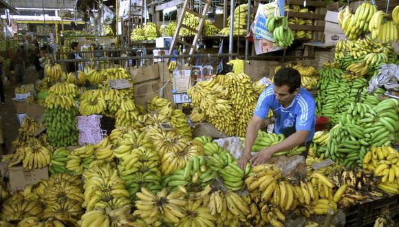 Hongo representa un grave peligro para la producción de todas las variedades de bananos. (Foto: Reuters)