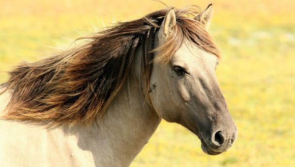 Senasa podrá reducir o ampliar el periodo de suspensión de equinos de acuerdo con la información que reciba de Europa. (Foto: Pixabay/Referencial)