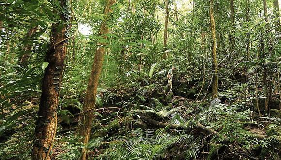 Serfor. Plantea nueve corredores económicos para sector forestal. (Foto: Getty Images)