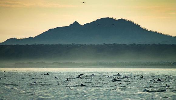 La Reserva Nacional Mar Tropical de Grau se ubicará frente a las costas de los departamentos de Tumbes y Piura. (Foto. Sernanp)