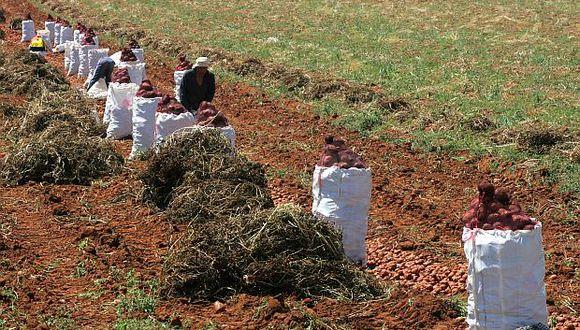 El Ejecutivo envió al Congreso un proyecto de ley para crear Mi Agro, la nueva entidad que financiaría a los productores del sector agrario. (Foto: El  Comercio)
