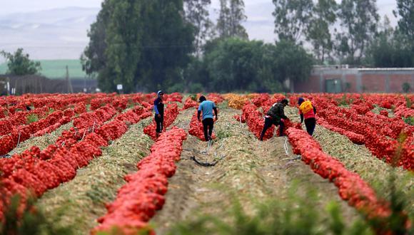 La medida busca impulsar la agricultura familiar. (Foto: Hugo Curotto / @photo.gec)