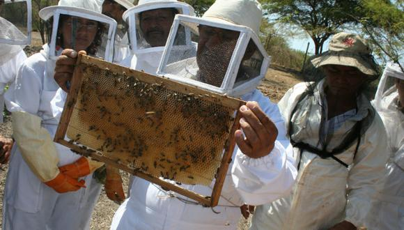 El SENASA muestrea colmenas y aplica tratamientos orgánicos a las colonias de abejas. (Foto: Referencial)