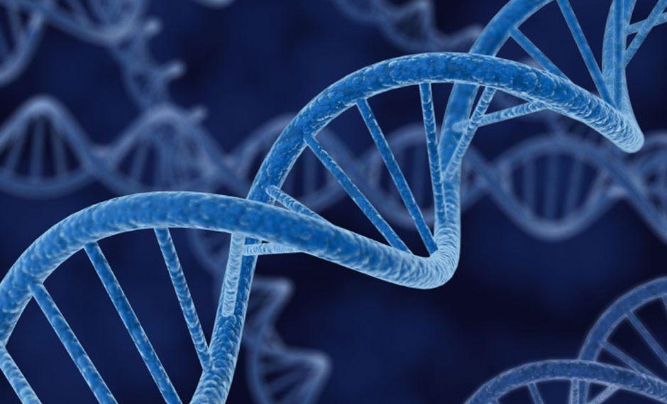 FOTO 6 |  Genética dirigida.  El cambio deliberado de genes puede ser objeto de controversia y, a menudo, va de la mano con cuestiones éticas. Y si bien la genética dirigida —elementos genéticos naturales o modificados que se propagan a través de poblaciones rápidamente— no es diferente, ofrece un enorme poder para combatir enfermedades o eliminar especies de plagas como los mosquitos que transmiten el paludismo. En los últimos años, estos esfuerzos recibieron un estímulo con la introducción de la edición de genes CRISPR, que facilita la inserción de material genético en puntos específicos en los cromosomas. (Foto: Difusión)