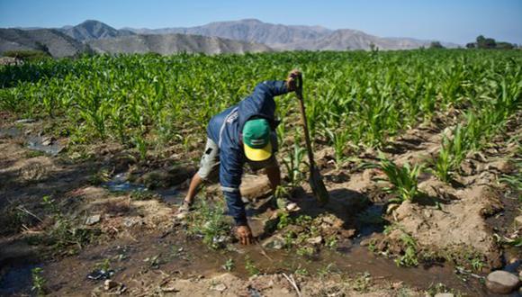 Los agricultores del país podrán acceder a financiamiento con bajas tasas de interés. (Foto: GEC)