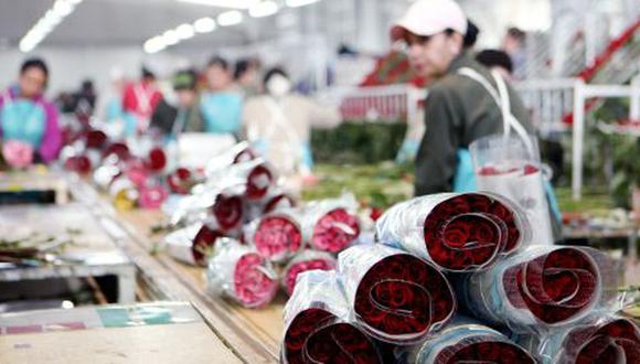 Las exportaciones de flores peruanas ascendieron a US$ 8 millones en el 2019.
