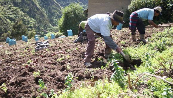 Agricultura. (Foto: GEC)