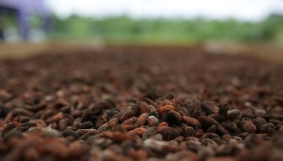 El cacao se produce en 16 regiones del país, encabezadas por San Martín, donde se cosecharon 55,302 toneladas en el 2018. (Foto: Alessandro Currarino/ GEC)