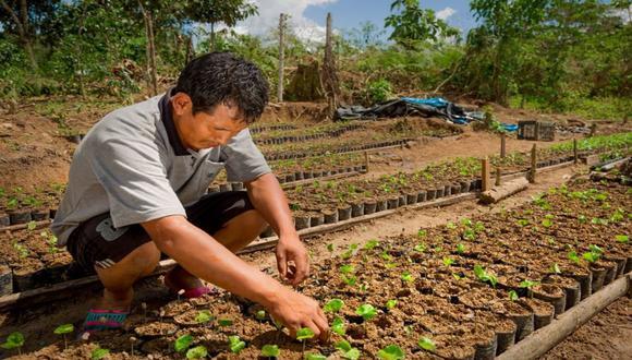 A pesar de que nuevos cultivos han empezado a despertar el interés de los pobladores del VRAEM, la producción hoja de coca continúa en crecimiento (Foto: Andina)