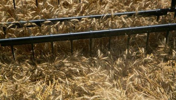 Argentina es el principal exportador mundial de aceite y harina de soja, pero en los últimos años la superficie dedicada a la oleaginosa en el país ha ido disminuyéndose, en parte en beneficio del maíz, un cultivo que compite con la oleaginosa por superficie. (Foto: Reuters)