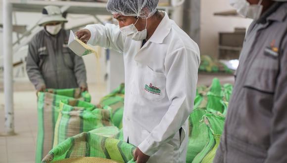 """""""Aún no se ha determinado la dosis de fumigación más apropiada para el control de plagas en granos de quinua procedente de España"""", según Senasa. (Foto: GEC)"""