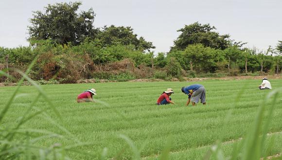 """Casi ninguna entidad microfinanciera presta a la pequeña agricultura familiar. La mayoría de las cajas """"rurales"""" son urbanas."""