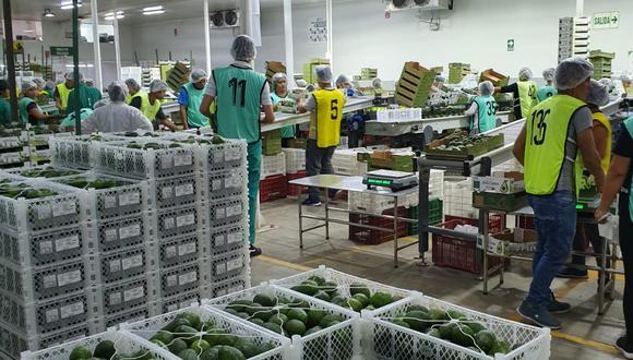 Demanda externa de palta crece, pese a pandemia, según Verdeflor SAC.