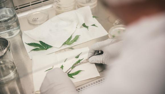 Desde el año pasado, a través de Spectrum Therapeutics, la división médica de la transnacional, Canopy Growth ha trabajado para introducir al mercado peruano sus productos de cannabis medicinal. (Foto: Canopy Growth)