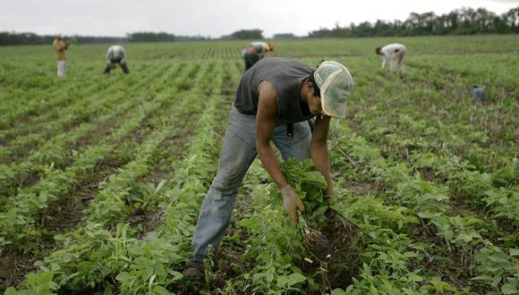 Soya de Bolivia no ingresará al Perú  (Foto: AP )