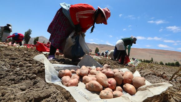 El programa de financiamiento directo busca reactivar la producción agropecuaria. (Foto: GEC)