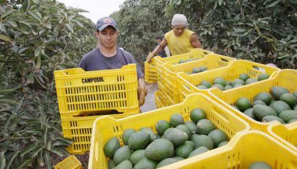 16 de agosto del 2011. Hace 10 años. Arriban paltas de Perú a EE.UU. En la próxima campaña se exportarán 22 millones de kilos al mercado estadounidense.