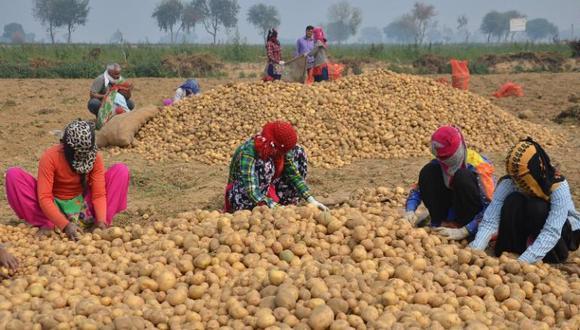 Agricultores de la India. Foto: AFP