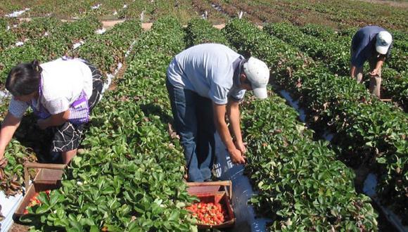 Los pequeños agricultores han sido los más afectados por la cuarentena. (Foto: Minam)
