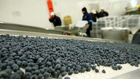 La Libertad y Lambayeque son las regiones más productoras de arándanos en el país. (Foto: GEC)