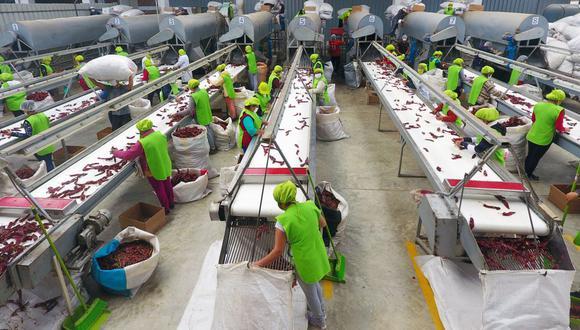 Agroexportaciones. (Foto: GEC)