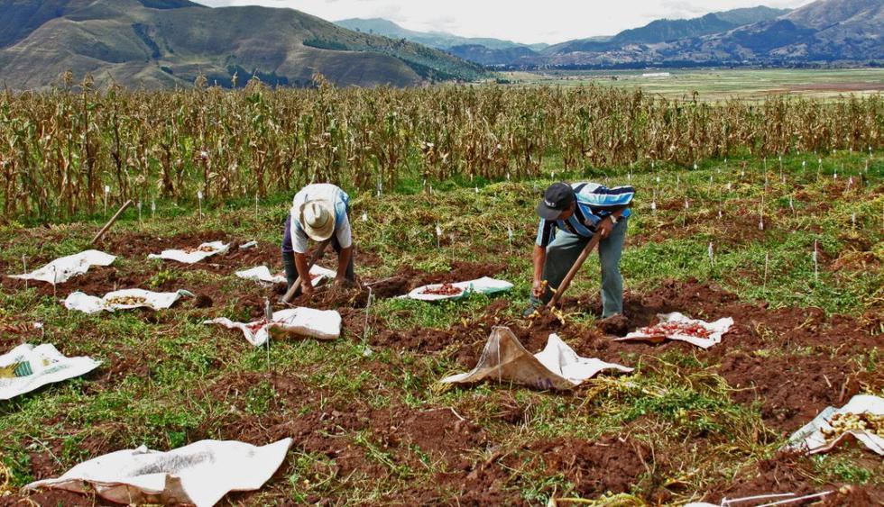 Nuevo Régimen Agrario: lo que trae para la negociación colectiva y los sindicatos. (Foto: Midagri)