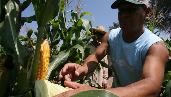 Lluvias favorecerán los cultivos de todo el Perú. (Foto: USI)
