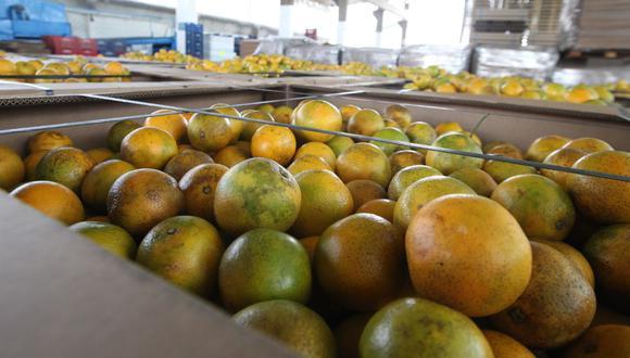 Durante la campaña del 2020 el Perú logró exportar un total de 268,000 toneladas de cítricos. (Foto: GEC)