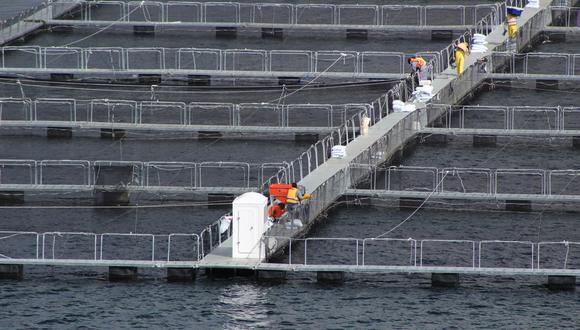 En la acuicultura y el sector forestal hay flexibilidad laboral y, a pesar de ello, hasta hace poco tuvieron poco dinamismo. (Foto: Difusión)