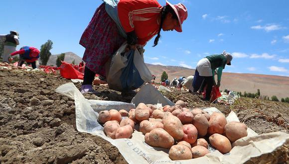 Midagri indicó que Agroideas continuará brindando facilidades en favor de los productores agropecuarios durante este año. (Foto: GEC)
