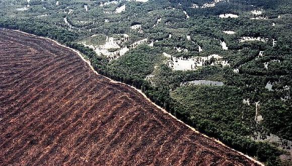 En Brasil se redujo a la mitad el tiempo para emitir una alerta de deforestación (Internet)
