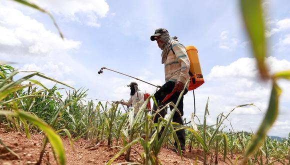 En total, en el 2018 se vendieron fuera de la UE más de 81,000 toneladas de estos y otros pesticidas prohibidos, según la rama británica de Greenpeace y Public Eye. (Reuters)