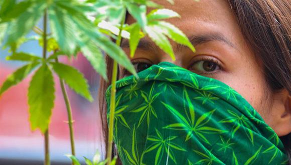 El autocultivo asociativo de cannabis fue una petición planteada al Congreso por la asociación Cannabis Gotas de Esperanza y la Federación de Cannabis Medicinal (Fecame). (Foto: EFE/José Pazos).