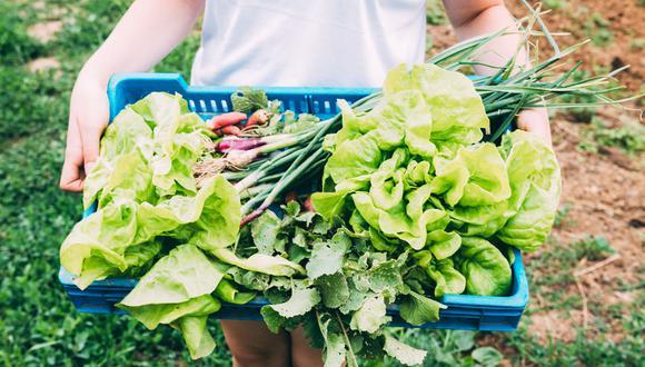 Foto 1 |  Agricultor Orgánico: Con un mercado en crecimiento como el de los alimentos orgánicos se necesitarán nuevas técnicas de agricultura para abastecer al mercado cada vez más demandante. (Foto: Freepik)