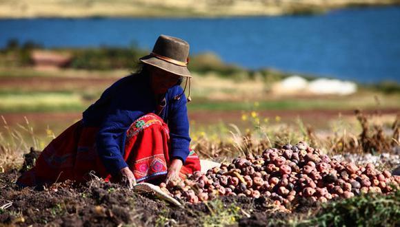 Recursos son del Fondo Agroperú y servirán para apoyar a este sector de pequeños productores.