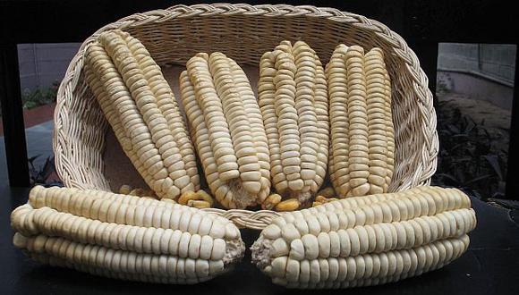 España es el principal comprador del maíz gigante del Cusco.