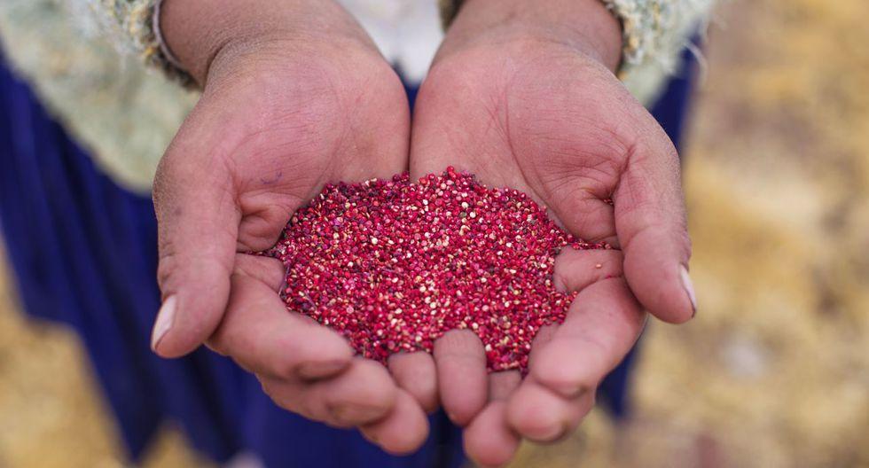 A junio de 2019, el monto exportado de quinua ascendió a US$7 millones. (Foto: GEC)