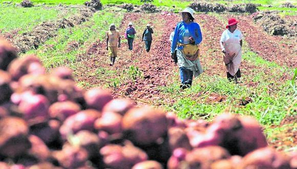 Editorial de Gestión. Lo crucial es fomentar la inclusión de la agricultura familiar en la economía de mercado. (Foto: GEC)
