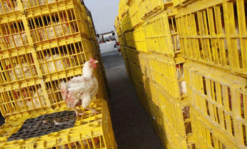 Precio del pollo sigue cayendo (Foto: USI).