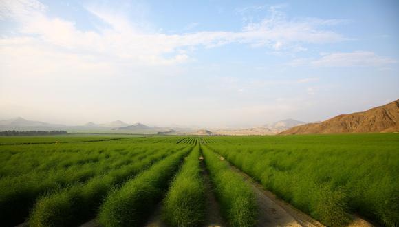 El sector Agropecuario peruano creció 11.47% en el 2017, por el resultado favorable del subsector Agrícola (19.47%).