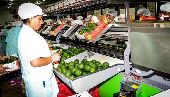 Exportaciones de palta. (Foto: Difusión / Adex)