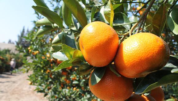 Exportación de mandarinas