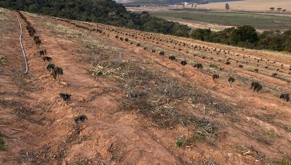"""""""Cualquier pérdida por el evento de hoy será muy limitada"""", dijo Carlos Mera, jefe de investigación agrícola de Rabobank International. """"Sin embargo, aún vemos cierto potencial de heladas en los próximos tres días""""."""