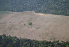 Editorial de Bloomberg: cómo EE.UU. puede ayudar a salvar la selva amazónica