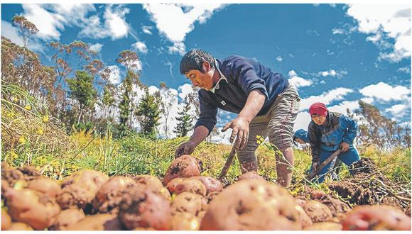 Consultado por las actuales campañas agrícolas en la sierra central, Calmell del Solar destacó que los cultivos más fuertes son la papa, maíz, verduras, trigo y quinua. En la selva central, el kion es la nueva estrella.
