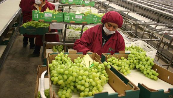 Las exportaciones peruanas de uvas registraron un valor de US$ 272 millones, un 4% más que en el año pasado (Foto: Andina).