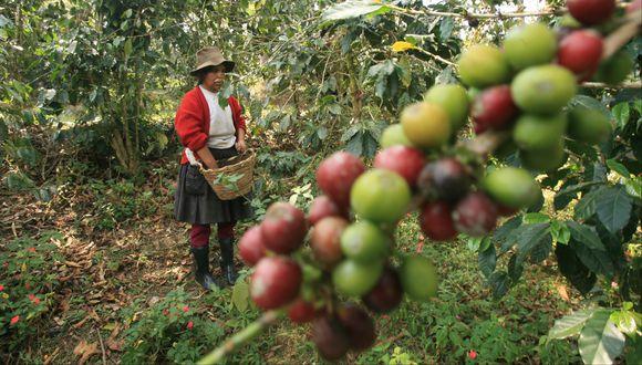 El grano de café mostró un desempeño positivo en agosto. (Foto: USI)