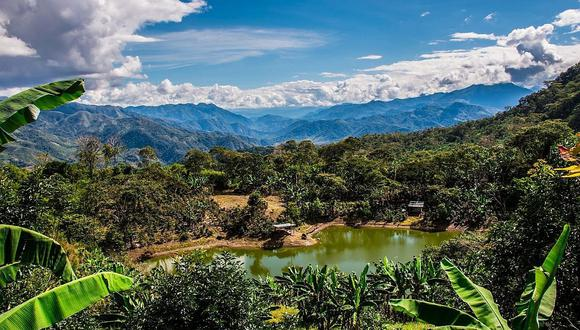 Los Bosques de Neblina-Selva Central.