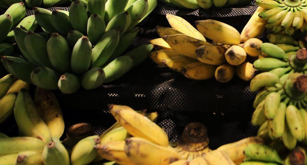 Colombia confirmó, a inicios de este mes, la presencia del hongo Fusarium R4T en cuatro de sus fincas bananeras.